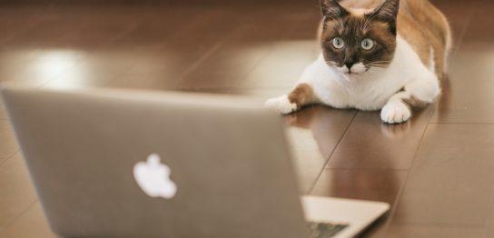 EAランキングを眺めている猫